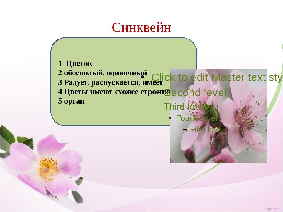 Синквейн 1 Цветок 2 обоеполый, одиночный 3 Радует, распускается, имеет 4 Цвет...
