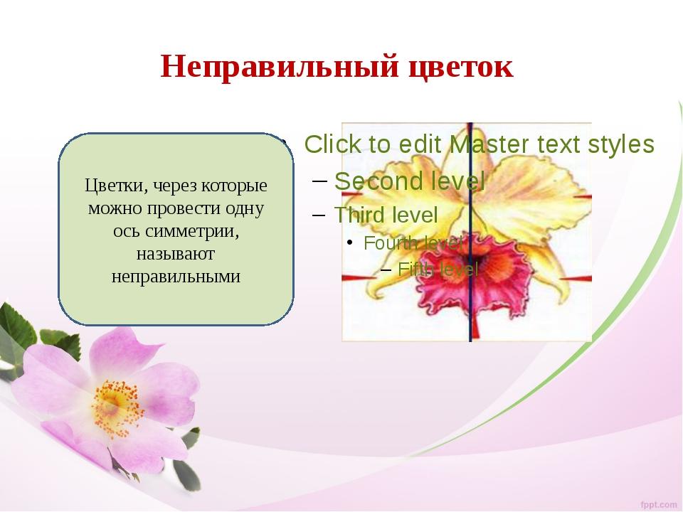 Неправильный цветок Цветки, через которые можно провести одну ось симметрии,...