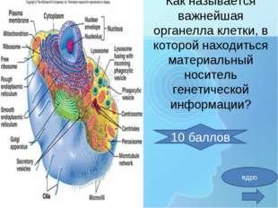 Как называется важнейшая органелла клетки, в которой находиться материальный