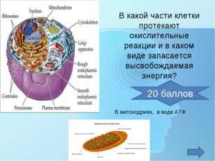 В какой части клетки протекают окислительные реакции и в каком виде запасаетс