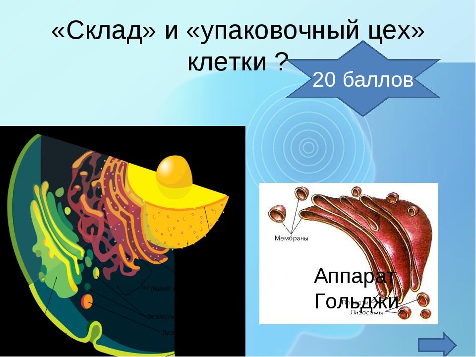 «Склад» и «упаковочный цех» клетки ? Аппарат Гольджи 20 баллов