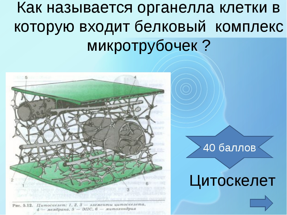 Как называется органелла клетки в которую входит белковый комплекс микротрубо...
