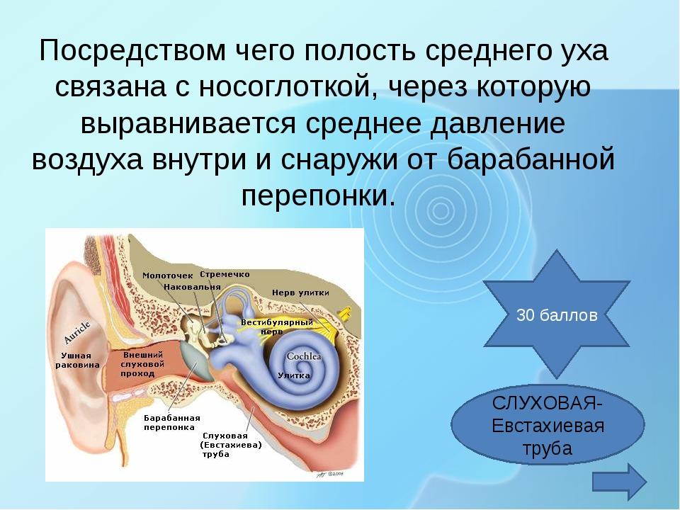 Посредством чего полость среднего уха связана с носоглоткой, через которую вы...