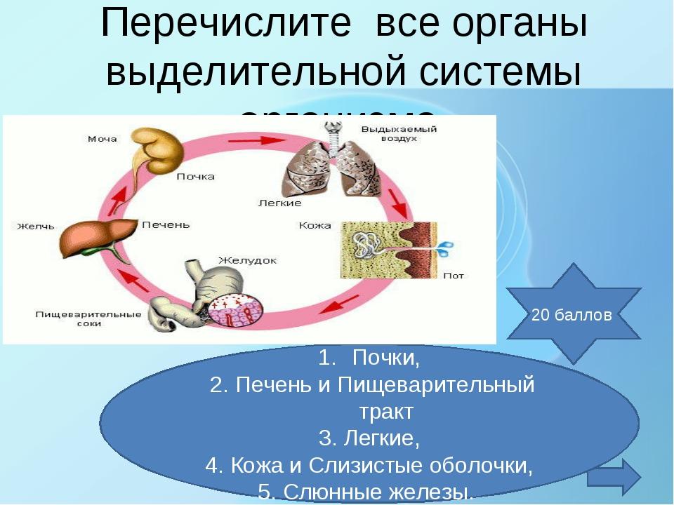 Перечислите все органы выделительной системы организма. Почки, 2. Печень и Пи...
