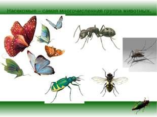 Насекомые – самая многочисленная группа животных.