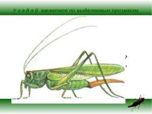 У г а д а й насекомое по выделенным признакам. Летает, бегает, прыгает, плава