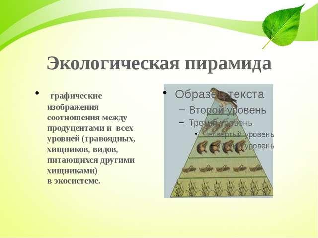Экологическая пирамида графические изображения соотношения между продуцента...