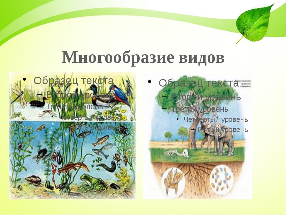Многообразие видов