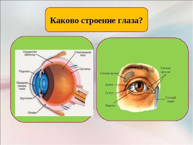 Каково строение глаза?