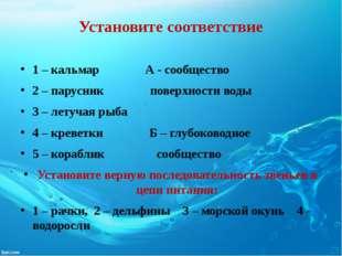 Установите соответствие 1 – кальмар А - сообщество 2 – парусник поверхности в