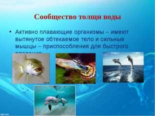 Сообщество толщи воды Активно плавающие организмы – имеют вытянутое обтекаемо