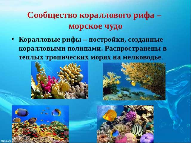 Сообщество кораллового рифа – морское чудо Коралловые рифы – постройки, созда...