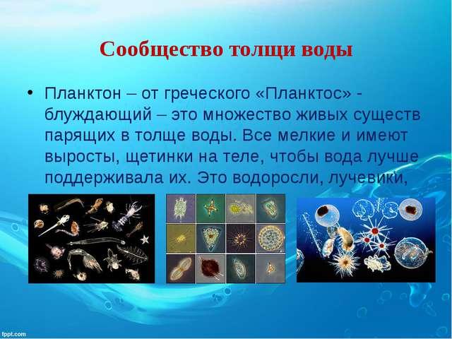Сообщество толщи воды Планктон – от греческого «Планктос» - блуждающий – это...