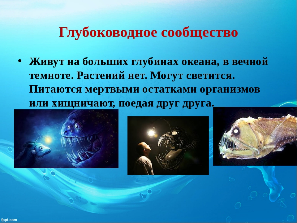 Глубоководное сообщество Живут на больших глубинах океана, в вечной темноте....