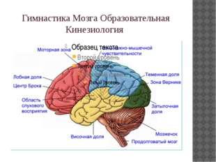 Гимнастика Мозга Образовательная Кинезиология