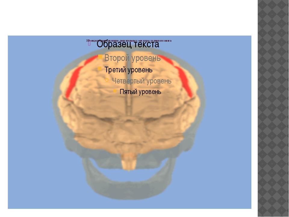 3D-модель расположения двигательных зон коры головного мозга