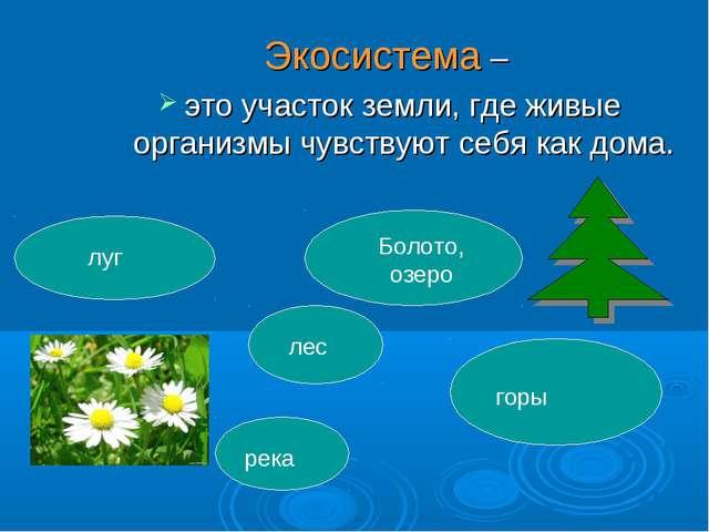 Экосистема – это участок земли, где живые организмы чувствуют себя как дома....