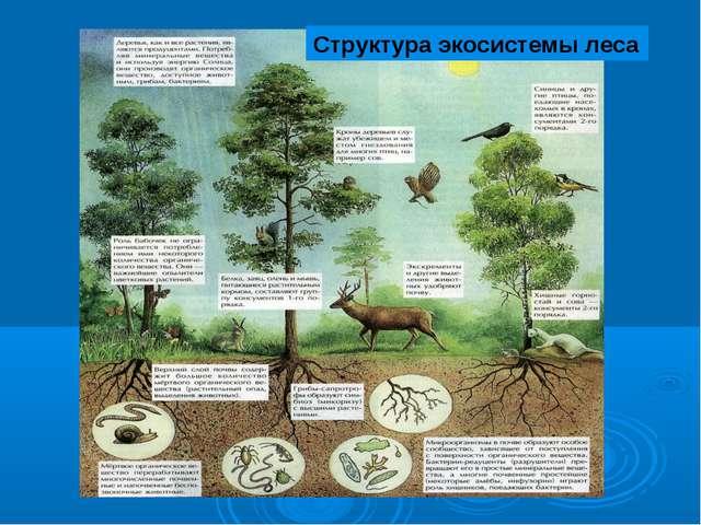 Структура экосистемы леса