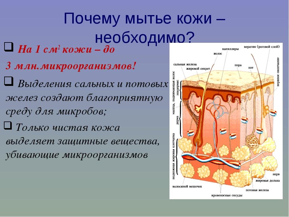 Почему мытье кожи – необходимо? На 1 см2 кожи – до 3 млн.микроорганизмов! Выд...