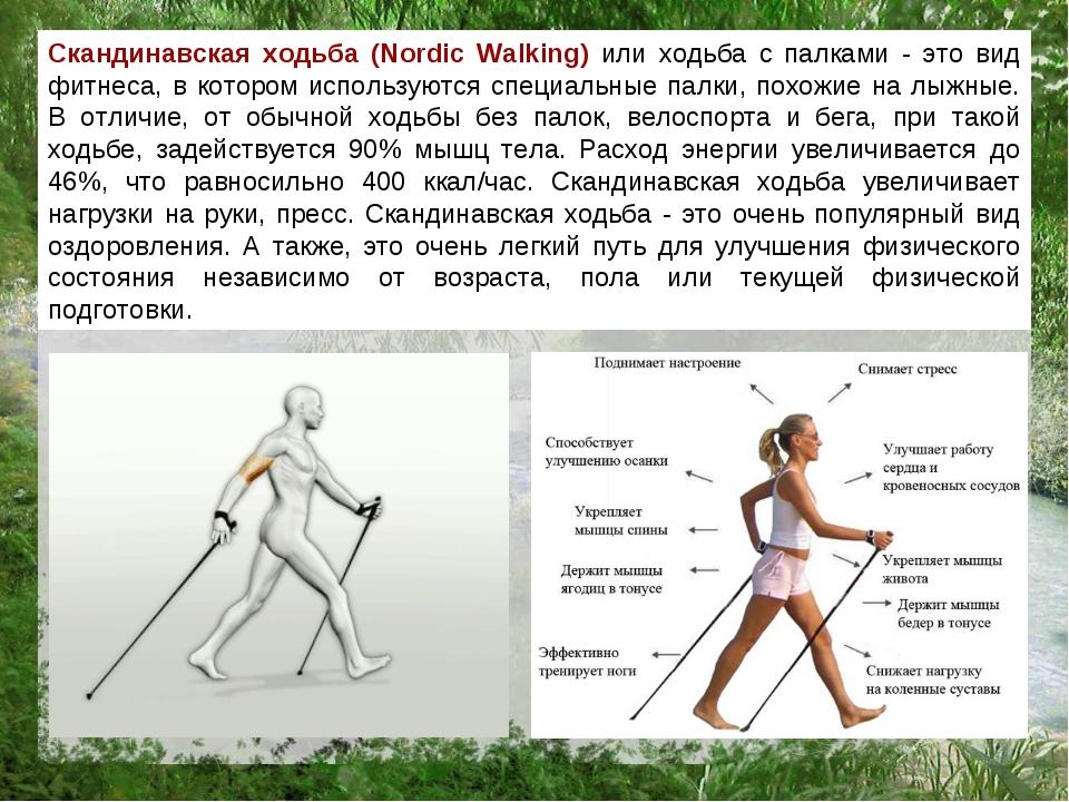 Скандинавская ходьба как сделать палки 620