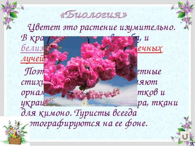 Цветет это растение изумительно. В красках есть и синева неба, и белизна снег...