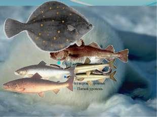 Морская фауна Бедна видами, но количественно богата обитают: солоноватоводная
