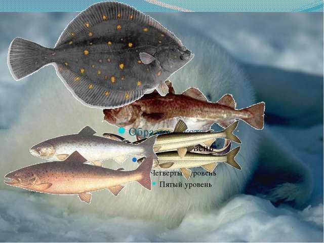 Морская фауна Бедна видами, но количественно богата обитают: солоноватоводная...