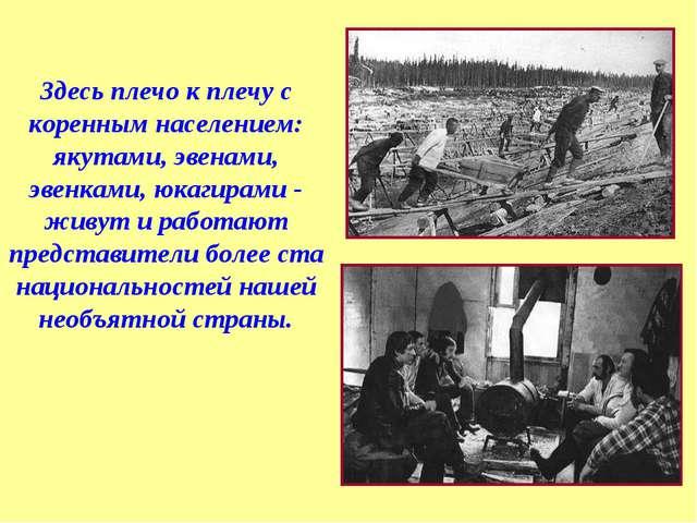 Здесь плечо к плечу с коренным населением: якутами, эвенами, эвенками, юкагир...