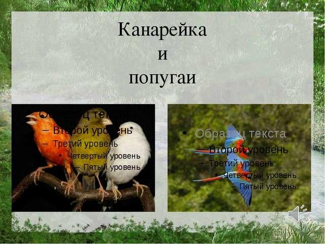 Канарейка и попугаи