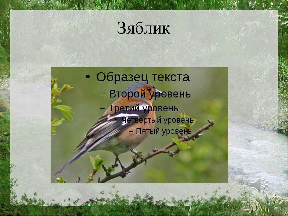Зяблик