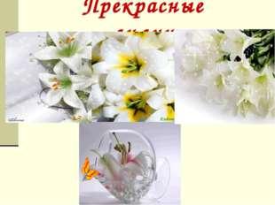 Прекрасные лилии