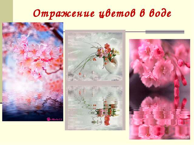 Отражение цветов в воде