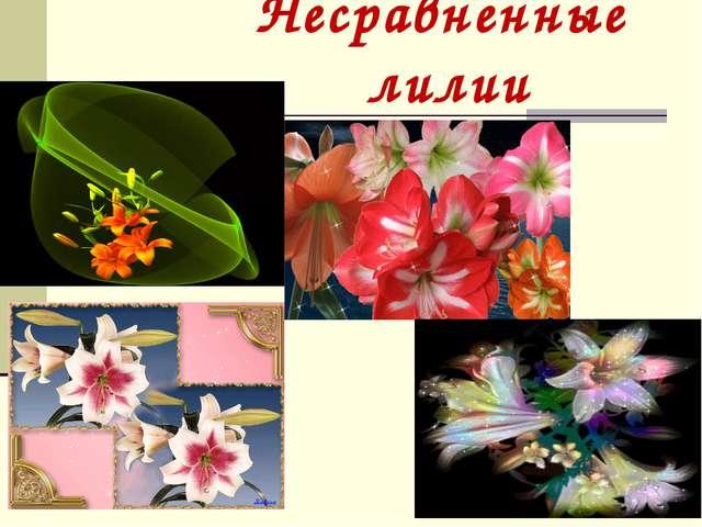 Несравненные лилии