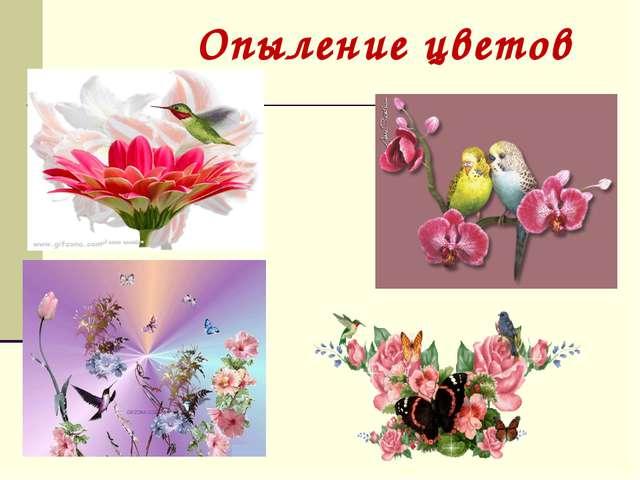 Опыление цветов