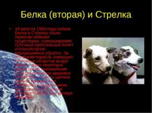 Белка (вторая) и Стрелка 19 августа 1960 года собаки Белка и Стрелка стали пе
