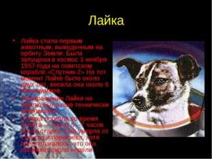 Лайка Лайка стала первым животным, выведенным на орбиту Земли. Была запущена