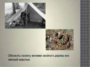 Обложить палатку ветвями хвойного дерева или овечьей шерстью