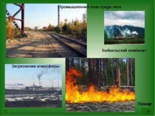 Какое дерево является самым распространенным в России? Почему предприятия лес