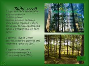 Виды лесов 1 группа –Леса заповедные, водозащитные и полезащитные, рекреацио
