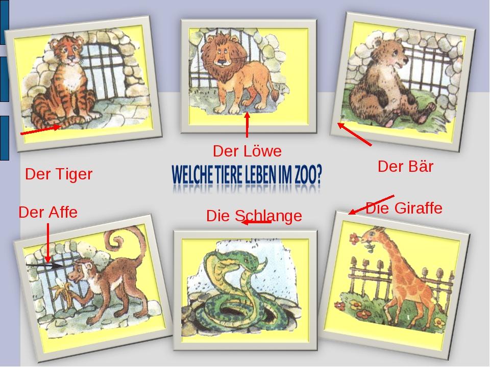 Der Tiger Der Löwe Der Bär Der Affe Die Schlange Die Giraffe