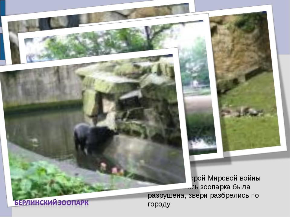 Во время Второй Мировой войны большая часть зоопарка была разрушена, звери ра...
