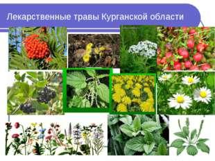 Лекарственные травы Курганской области