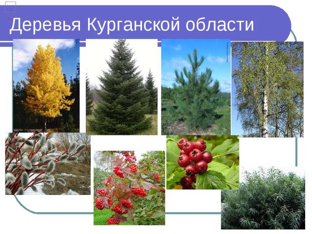 Деревья Курганской области