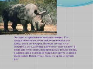 Это одно из древнейших млекопитающих. Его предки обитали на земле ещё 60 милл