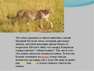 Это самое красивое и ловкое животное, самый быстрый бегун на земле, который,
