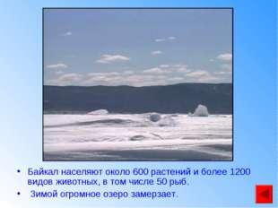 Байкал населяют около 600 растений и более 1200 видов животных, в том числе 5