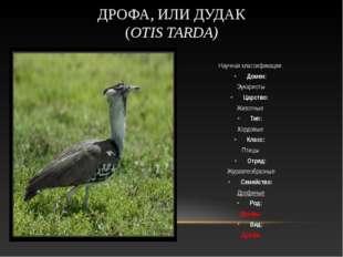 Научная классификация Домен: Эукариоты Царство: Животные Тип: Хордовые Кла