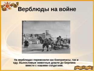 Верблюды на войне На верблюдах перевозили как боеприпасы, так и еду. Вынослив
