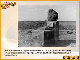 Могила немецкой служебной собаки в СССР. Надпись на табличке «Наш сторожевой