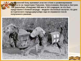 Четвероногий боец принимал участие в боях и разминировании местности на терри